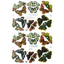 Botanical Butterfly Scraps ~ England