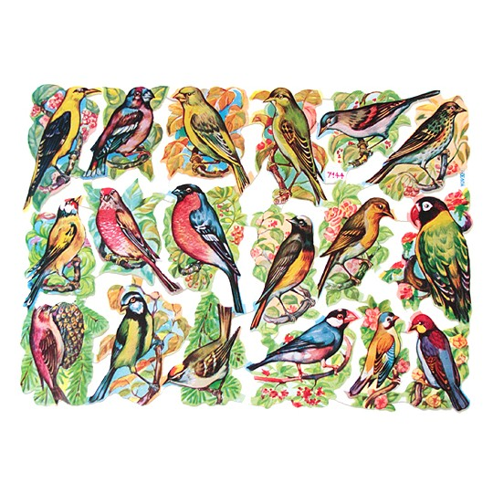 Perching Birds Scraps ~ Germany