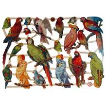 Tropical Bird Scraps ~ Germany