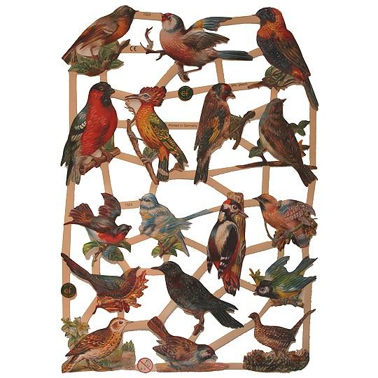 Woodland Birds Scraps ~ Germany