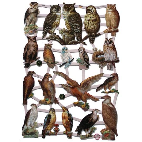 Birds of Prey Scraps ~ Germany