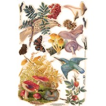 Botanical Birds & Mushrooms Scraps ~ England