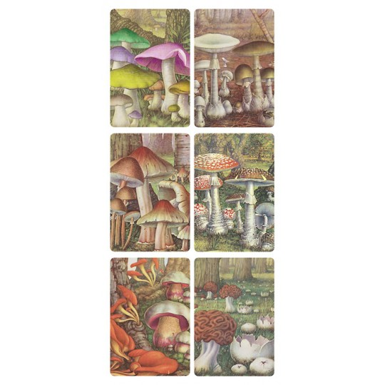 1 Sheet of Stickers Forest Mushrooms ~ Trade Card Style