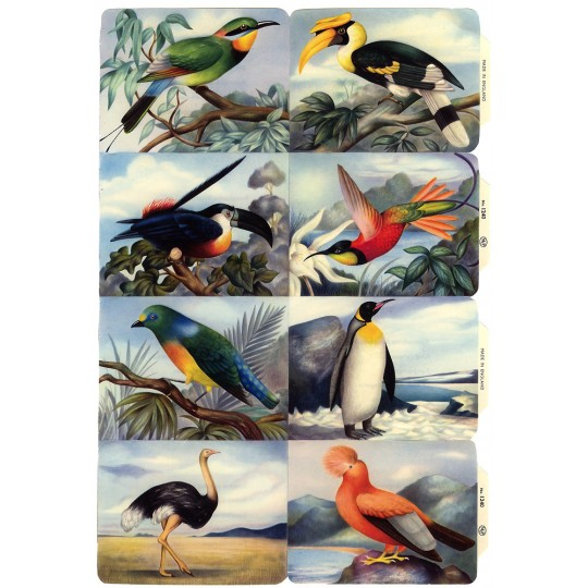 Vintage MLP Bird Scraps ~ England
