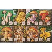 Mixed Mushrooms and Their Names ~ Vintage MLP ~ England ~ Out of Print