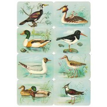 Ducks and Water Birds Scraps ~ Vintage Kruger ~ Germany