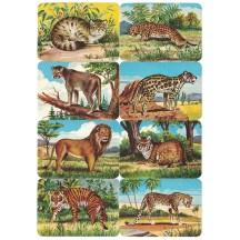 Rare Wild Cats Scraps ~ Vintage Kruger ~ Germany