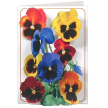3-D Pansies Card ~ England