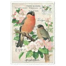 Bird Collage Postcard ~ Germany