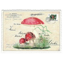 Red Mushroom Collage Postcard ~ Germany