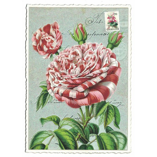Peppermint Rose Collage Postcard ~ Germany