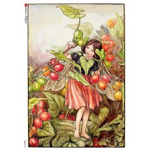 The Black Bryony Fairy Flower Fairies Rice Paper Decoupage Sheet ~ Italy