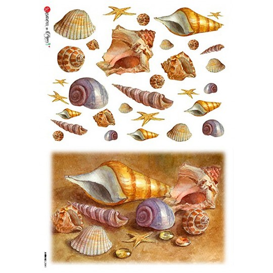 Sea Shells Rice Paper Decoupage Sheet ~ Italy