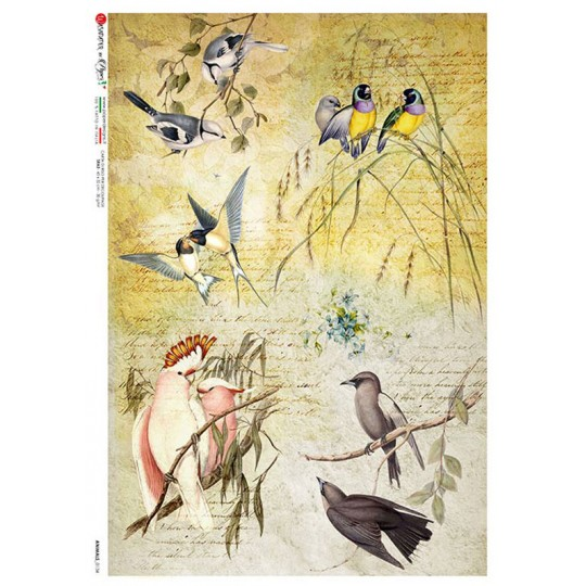 Bird Collage Ephemera Rice Paper Decoupage Sheet ~ Italy