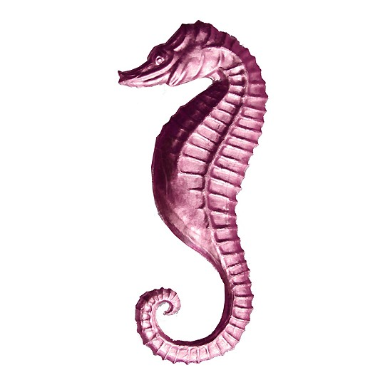 Extra Large Pink Dresden Seahorse ~ 2