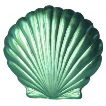 Extra Large Aqua Dresden Scallop Sea Shell ~ 2