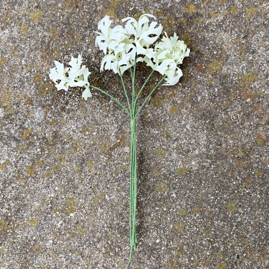 "12 Pale Green Flocked Silverwort Leaves ~ 1-1/2"" Long"