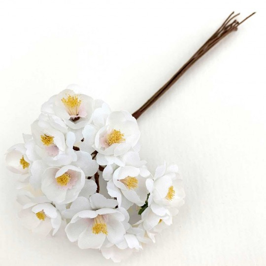 12 White Apple Blossoms ~ 3/4""
