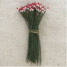 Extra Long White and Red Pointed Vintage Flower Stamen Peps ~ Germany