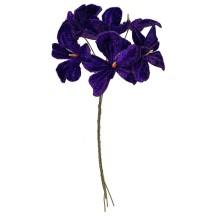 Bundle of 6 Velvet Violets ~ Czech Republic ~ Violet Purple