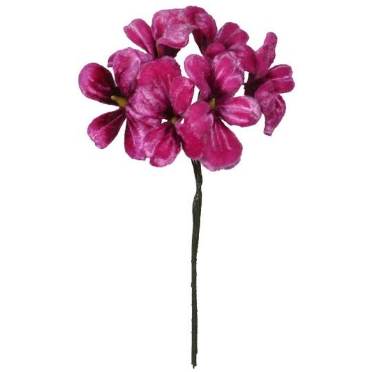 Bundle of 6 Deep Pink Ombre Violets ~ Czech Republic