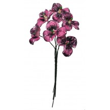 Bouquet of 6 Pink and Black Velvet Pansies ~ Czech Republic