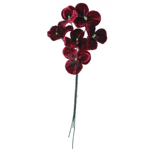 Bouquet of 6 Deep Burgundy Velvet Pansies ~ Czech Republic