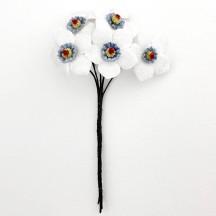 5 White and Blue Velvet Narcissus ~ Czech Republic