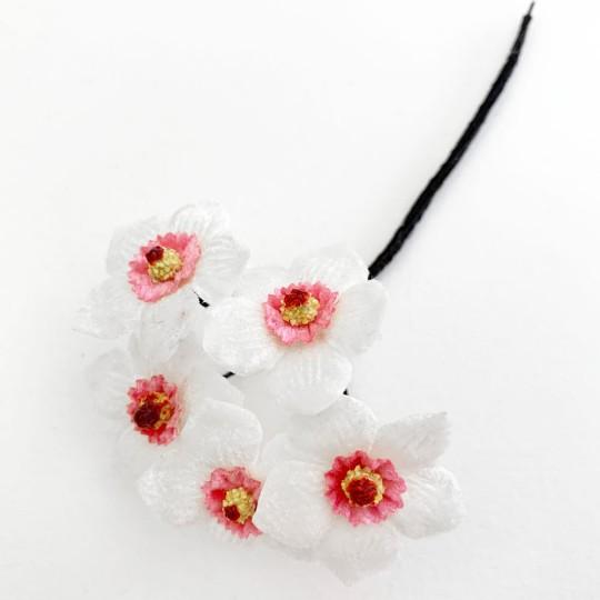 5 White and PInk Velvet Narcissus ~ Czech Republic