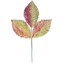 Sprig of Yellow & Pink Ombre Fringed Leaves
