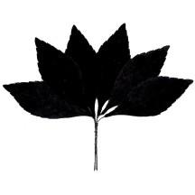 Set of 6 Black Velvet Leaves ~ Czech Repub.