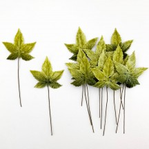 Set of 12 Sweet Gum Leaves ~ GREEN OMBRE