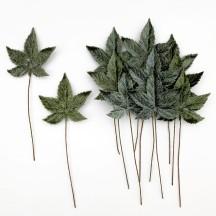 Set of 12 Sweet Gum Leaves ~ SAGE GREEN