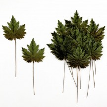 Set of 12 Maple Leaves ~ DARK GREEN OMBRE