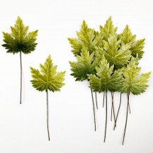 Set of 12 Maple Leaves ~ GREEN OMBRE