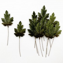 Set of 12 Elongated Maple Leaves ~ DARK GREEN OMBRE