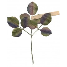 Spray of Multi Colored Rose Leaves ~ Vintage Germany