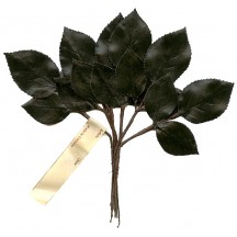 18 Dark Glossy Green Rose Leaves ~ Vintage Germany