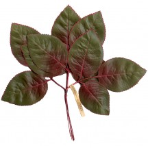 12 Large Green and Red Shaded Rose Leaves ~ Vintage Germany
