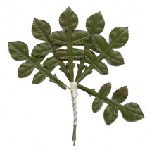 6 Glossy Green Rose Tiege Leaves ~ Vintage Japan