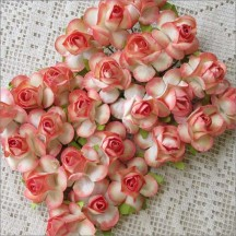 24 Paper Wild Roses in Peaches and Cream