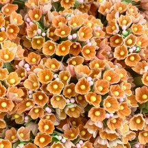 1 Bouquet of Paper Forget Me Nots in Orange