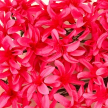12 Fuchsia Pink Paper Lilies or Star Flowers