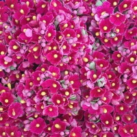 1 Bouquet of Paper Forget Me Nots in Fuchsia