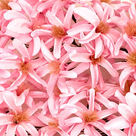 12 Light Pink Paper Lilies or Star Flowers