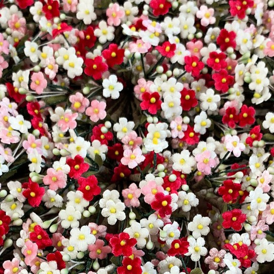 Mixed Bundle of Petite Velvet Forget me Nots ~ Czech Republic ~ RED, PINK and WHITE MIX