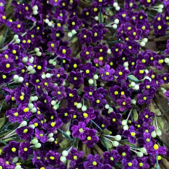 Bundle of Petite Velvet Forget me Nots ~ Czech Republic ~ VIOLET PURPLE