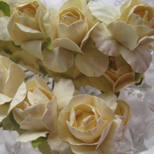 16 Paper Spring Roses in Ivory