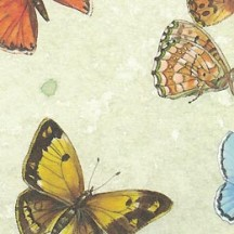 Large Mixed Papillon Butterfly Print Italian Paper