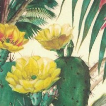 Bold Cactus and Succulents Collage Print Paper ~ Bomo Art Budapest Hungary